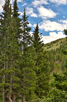 Breckenridge Summer Evergreens, BCO14-1390